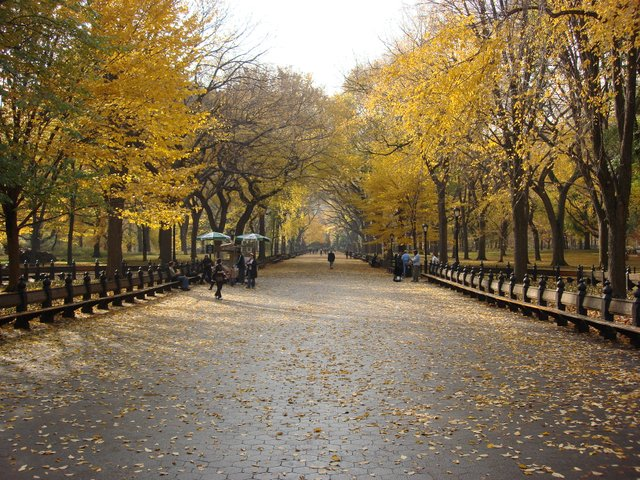 The Mall In Fall