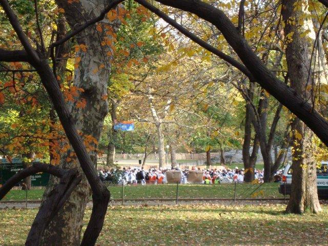 Marathon Through the Trees