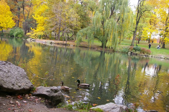 Golden Fall in Central Park, Harlem Meer