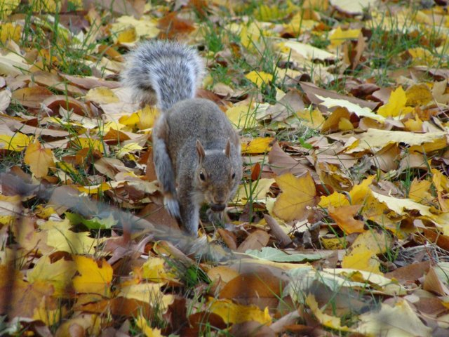 Squirreling