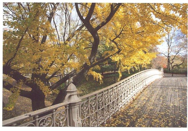 Central Park, Gingko Tree