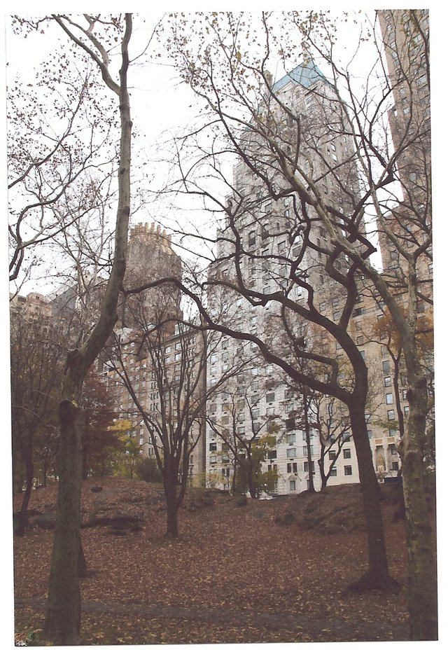 Central Park South Through The trees