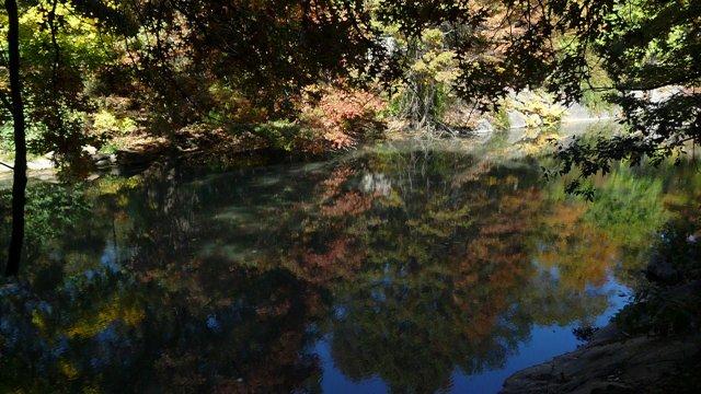 Mirroring Reflection