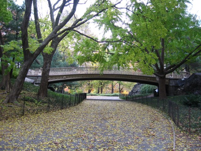 Bridge over fallen leaves