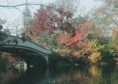 Central Park in Fall #8