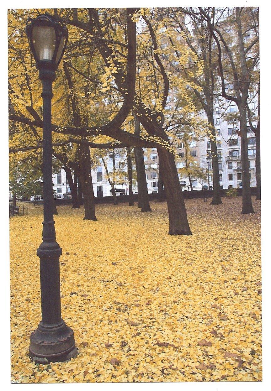 Lampost & Leaves