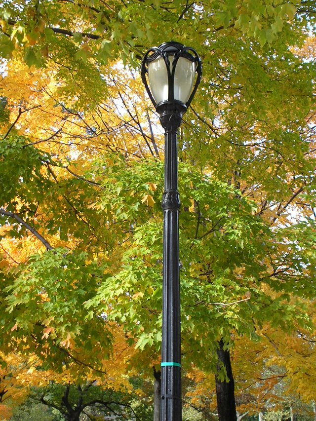 Light in the Fall