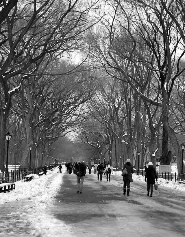 Literary Walk in the winter