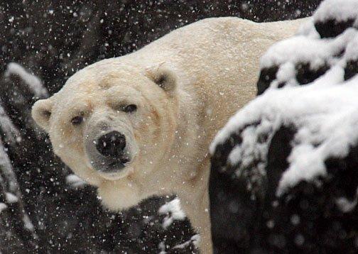 Gus in Snow