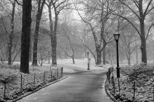 Walk Along A Snowy Path