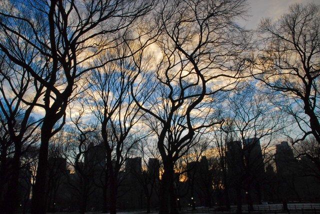 City through the Park