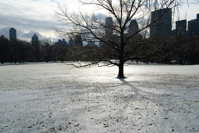 Sheep Meadow in Winter
