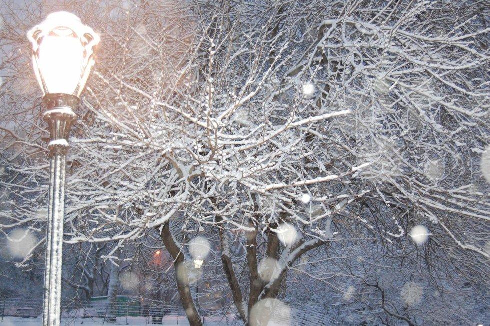 Snow by night light