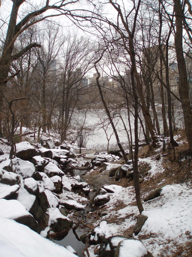 Creek in NYC