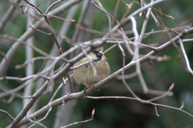 Bird in Central Park