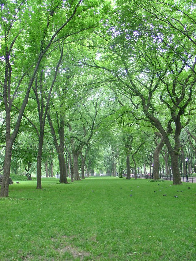 Summer Forest in Park