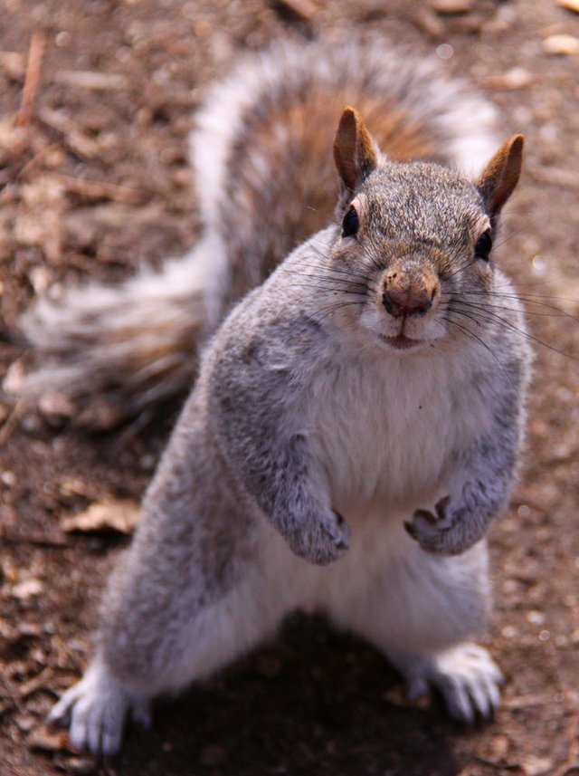 Feisty Squirrel
