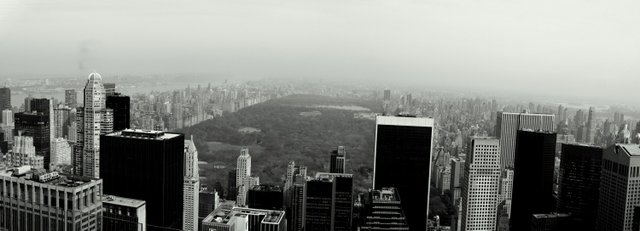 Central Park in the fog