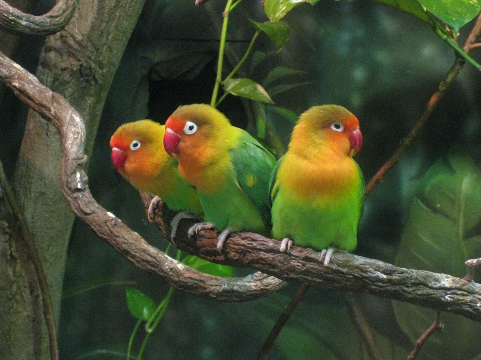 Three Musketeers on a branch