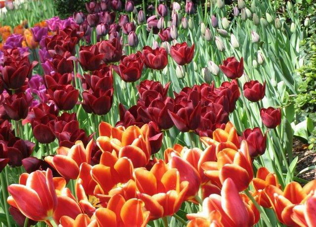 Bouquet in the Garden