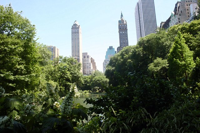 Apartments over looking Central Park