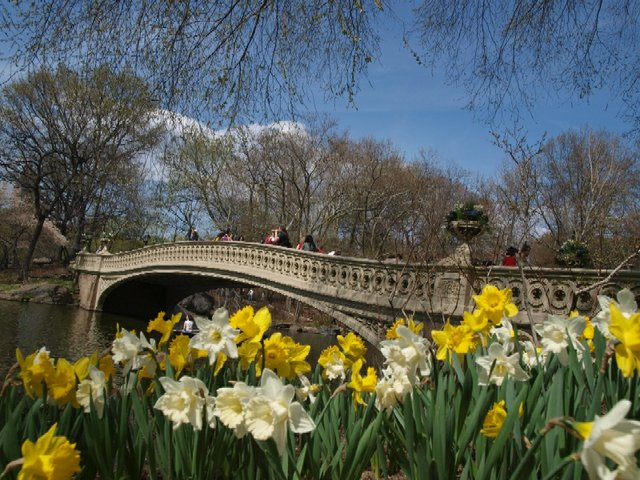 Bow Bridges - Spring