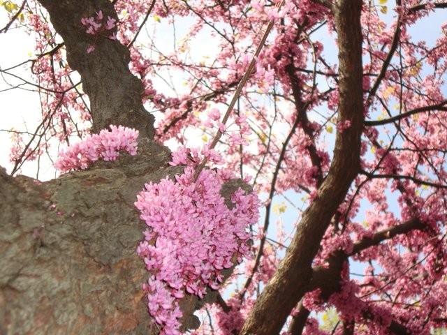 A Tree of Blooms