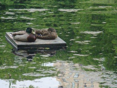 Ducks on their Dock