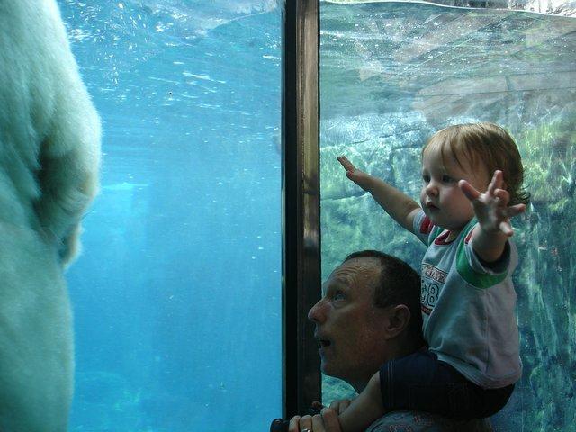 reaching for polar bears