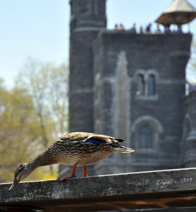 Duck and Castle...