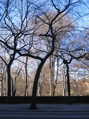 Taller trees
