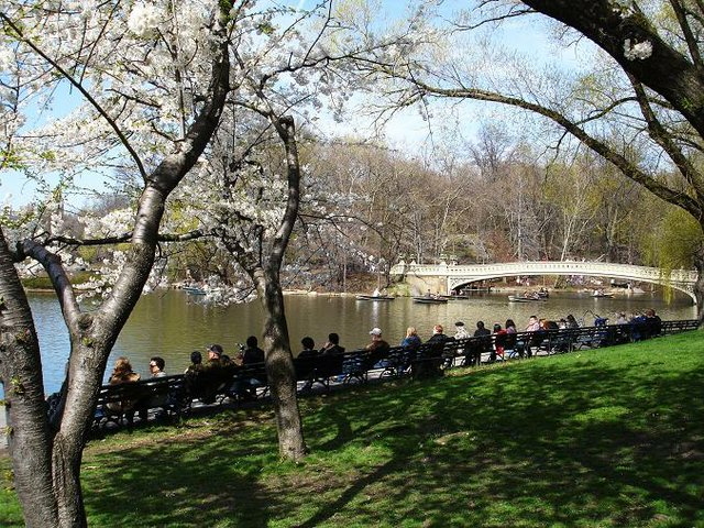 Spring at the Park