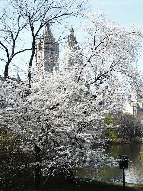 Spring view
