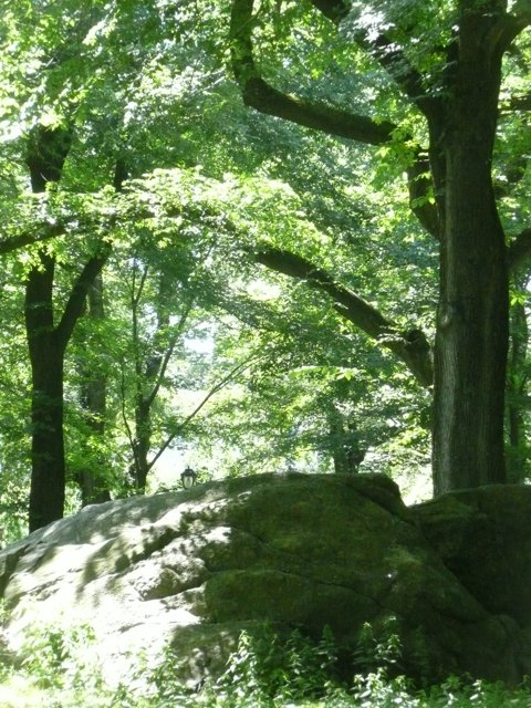 lamp, rock and trees