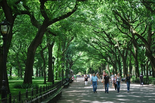 The Majestic Trees of Central Park