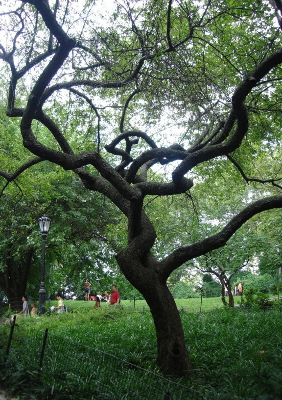 Tree at Crossroads
