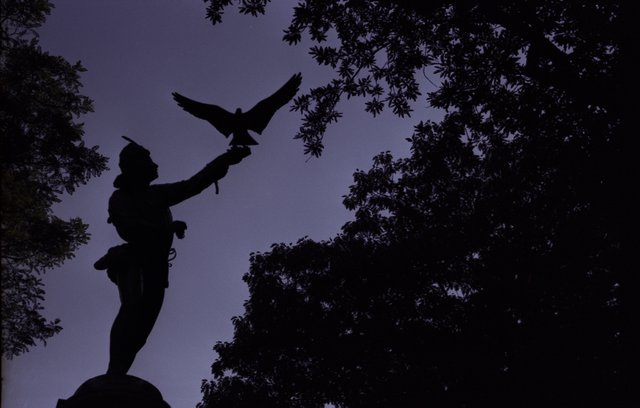 Falconer At Night