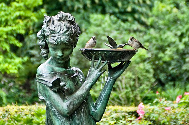 Birds in the Secret Garden