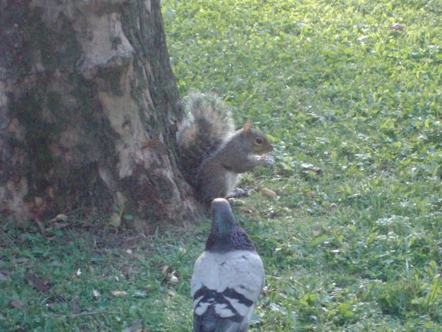 The squirrel in Central Park