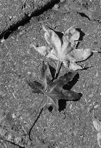 Leaves on cobblestones