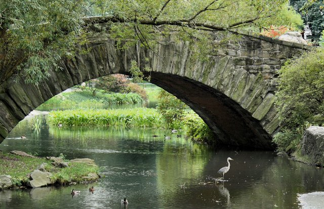 heron in the park