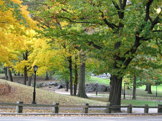 Nice fall stroll through Central Park.