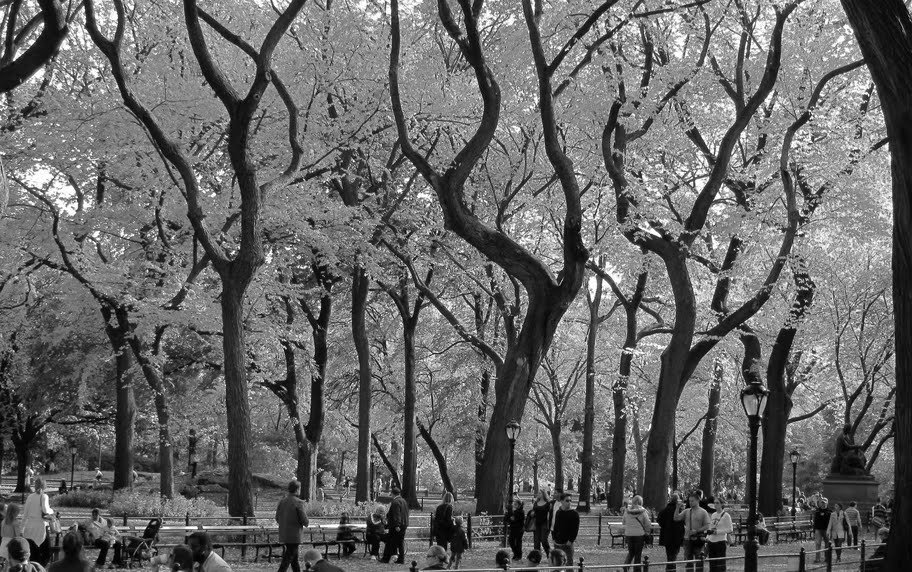 Central Park Autumn in Black and White