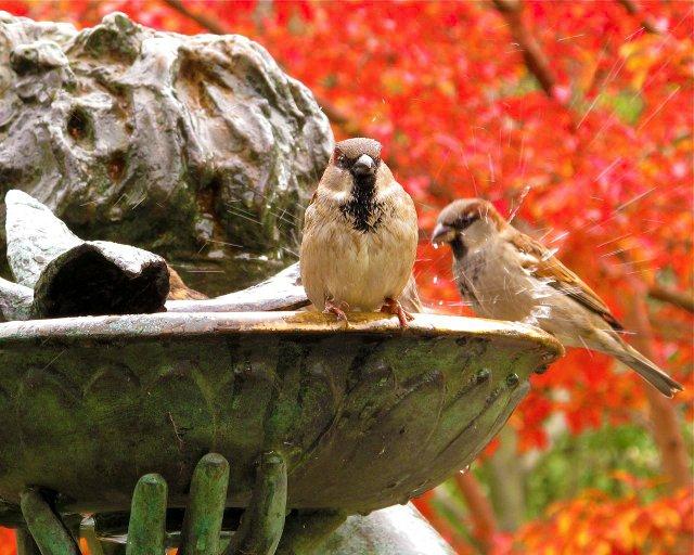 Bird Bath Splash