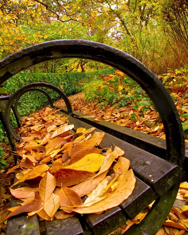 Leafy Benches