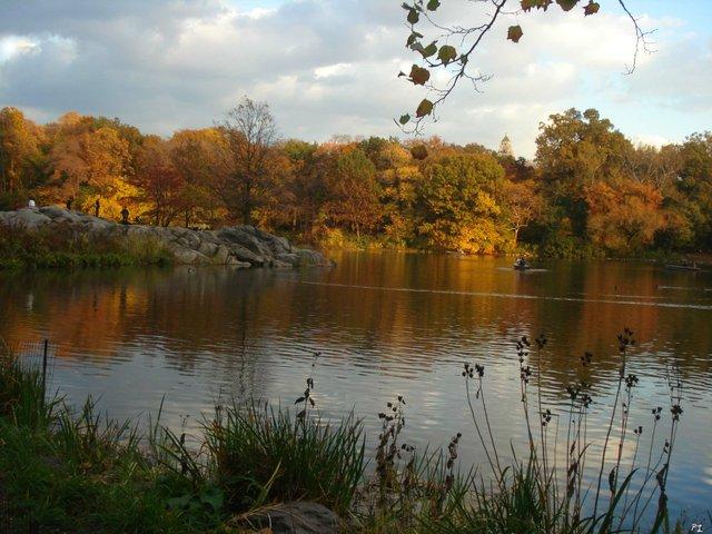 sun on the Lake treesNov 3 2009