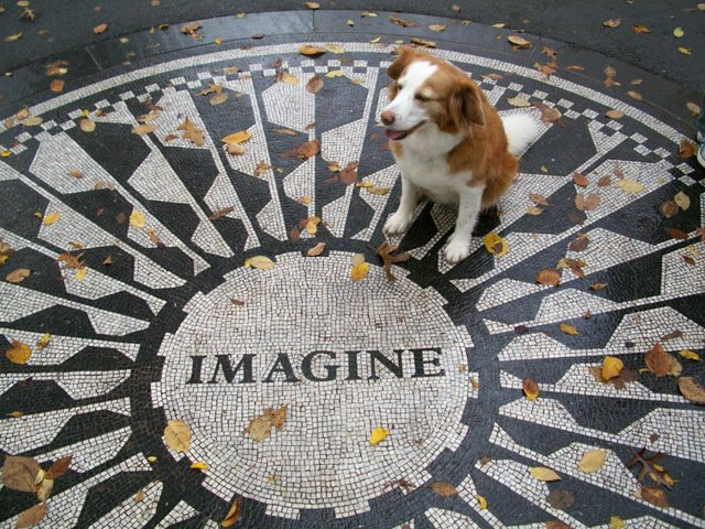 We can all Imagine.