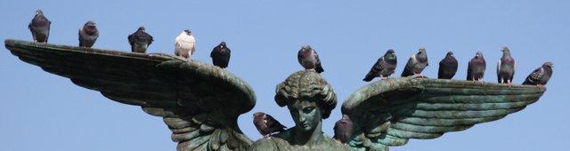 Flock on Angel