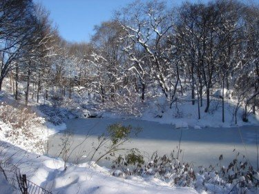 The Pond in Snow