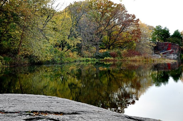 Turtle Pond Reflection